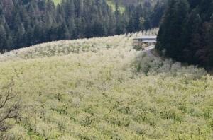 新緑のHood River-Panorama Pointより-4664-2