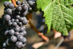 King Estate Winery-0317