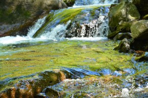 Wahclella Falls-7429