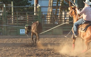 McMinnville Rodeo-Team Roping Heeler-4466