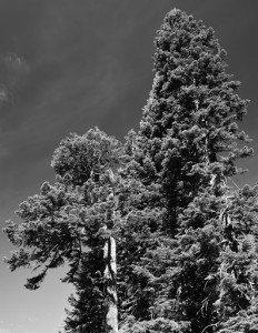 Mt Shasta - Panther Meadows-5899-BW