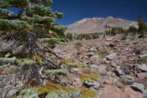 Mt Shasta - Panther Meadows-6018