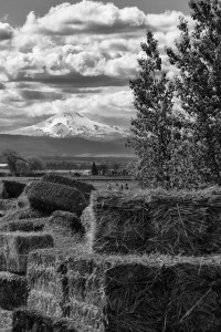 culvermt-jefferson-2528-bw_26834146651_o