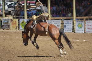 spray-rodeo-bare-back-riding-4710_27205421580_o