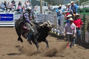 tillamook-rodeo--2016-8154_27952831035_o