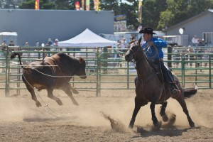 new-port-lincoln-county-fair-rodeo-bull-ride-0100_29215989495_o